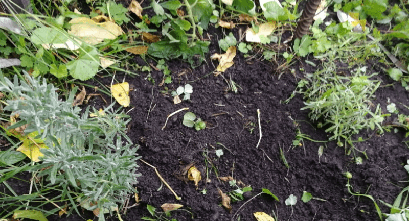 Многолетние цветы из семян: какие уже вырастила и еще запланировала