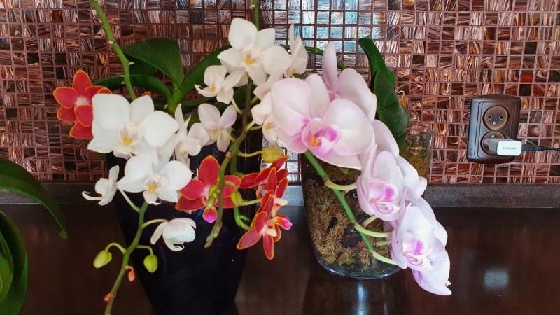 Сколько я потратила на орхидеи