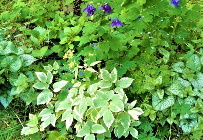 Топ садовых растений, в которых я сильно разочаровалась. Знала бы раньше – не сажала бы