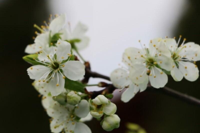 Важные заметки по весенней обрезке плодовых деревьев: советы для новичков и специалистов