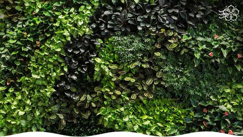 Вертикальное озеленение – простой способ преобразить приусадебный участок: правила, подбор растений, типичные ошибки