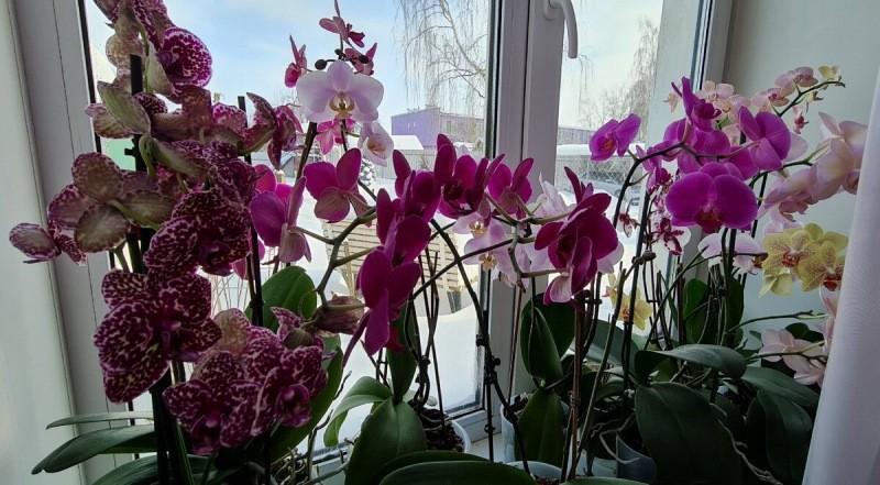 Как правильно ухаживать за орхидеями зимой, чтобы они долго и пышно цвели. Ошибка, которая губит орхидеи