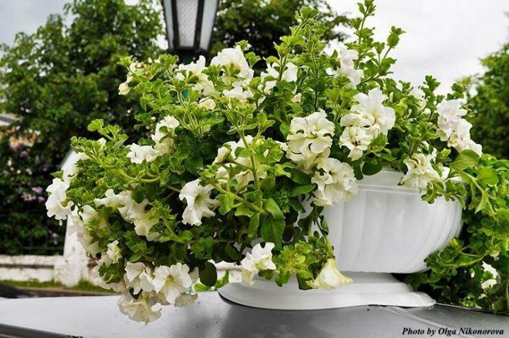 Какие цветы посадить на рассаду в феврале: выбираем растения для цветущего сада