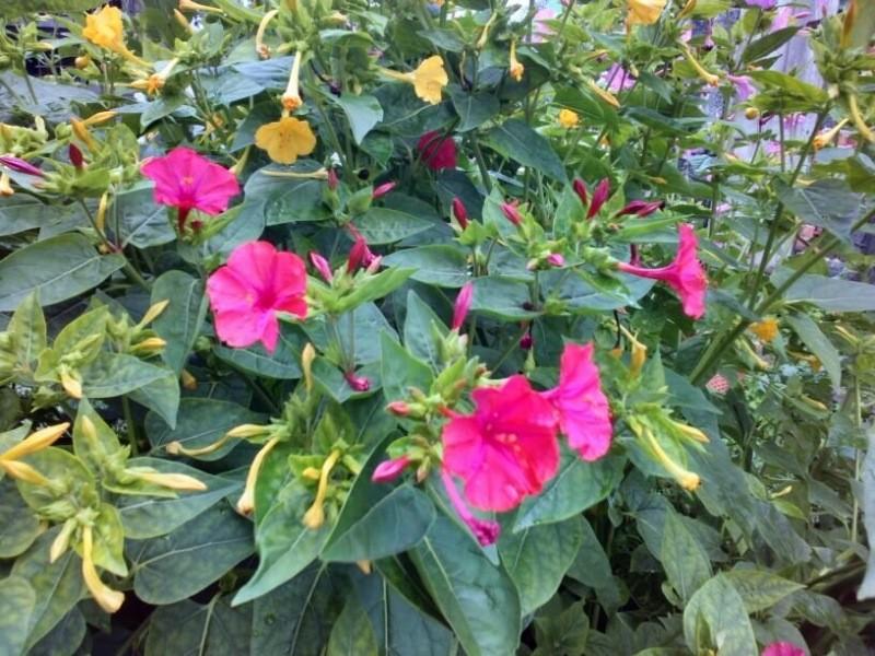 Когда и почему лучше выращивать в ведрах, горшках, ящиках, а не в грядке: 5 преимуществ емкостей в ог