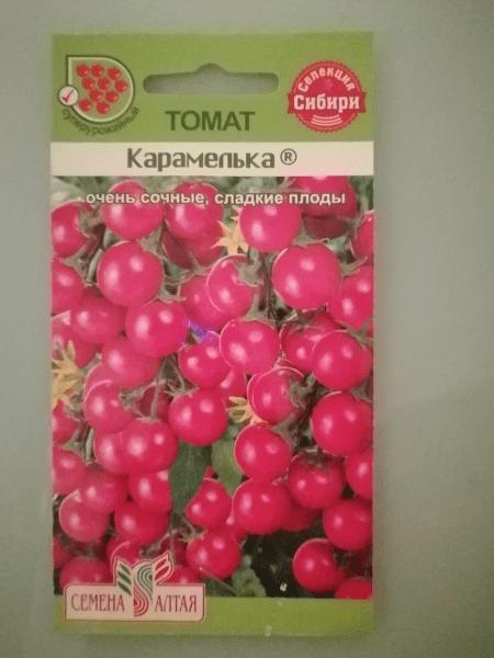 Комнатные помидоры: какие сеяла, а какие выросли