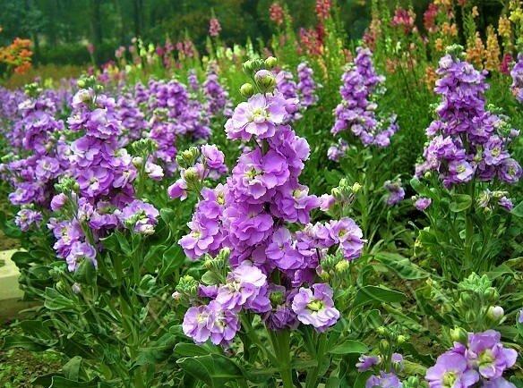 Красивые цветы, которые стоит посеять уже в феврале для раннего цветения