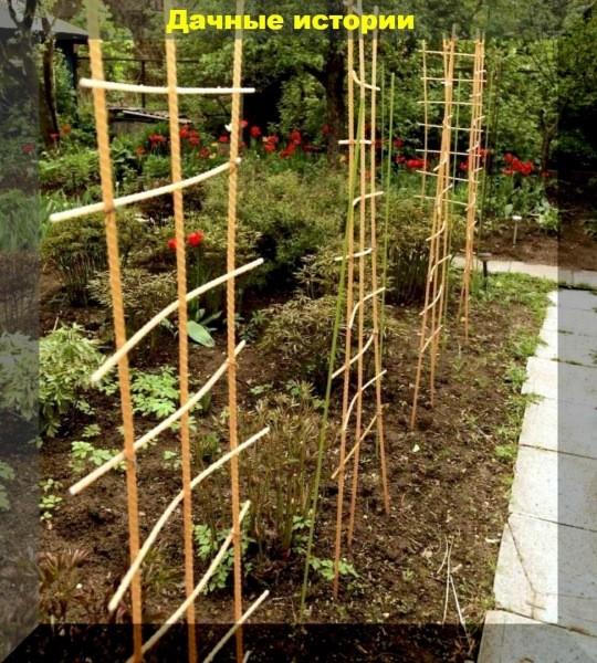Оригинально прячемся от соседей и украшаем неприглядные участки сада. Простые, но красивые приемы