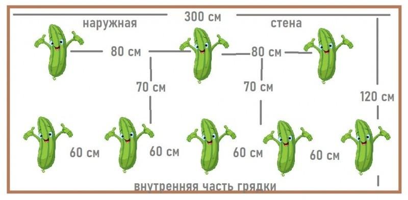 Посадила 8 кустов огурцов – собрала 320 кг урожая. Показываю выгодную схему посадки