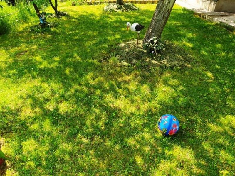 Применение гербицидов от сорняков на газоне: аргументы «за» и «против»