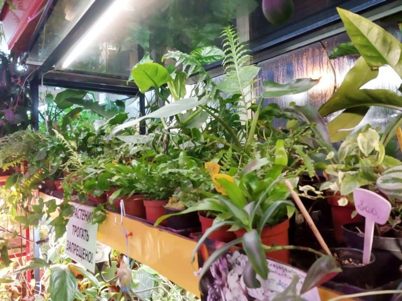 Сокровищница для цветовода на пр.Стачек, СПб: магазин редких растений. Почтой - отправляют!