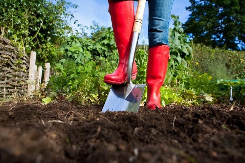 Теперь я знаю, как навсегда забыть о сорняках на своем дачном участке – делюсь методами