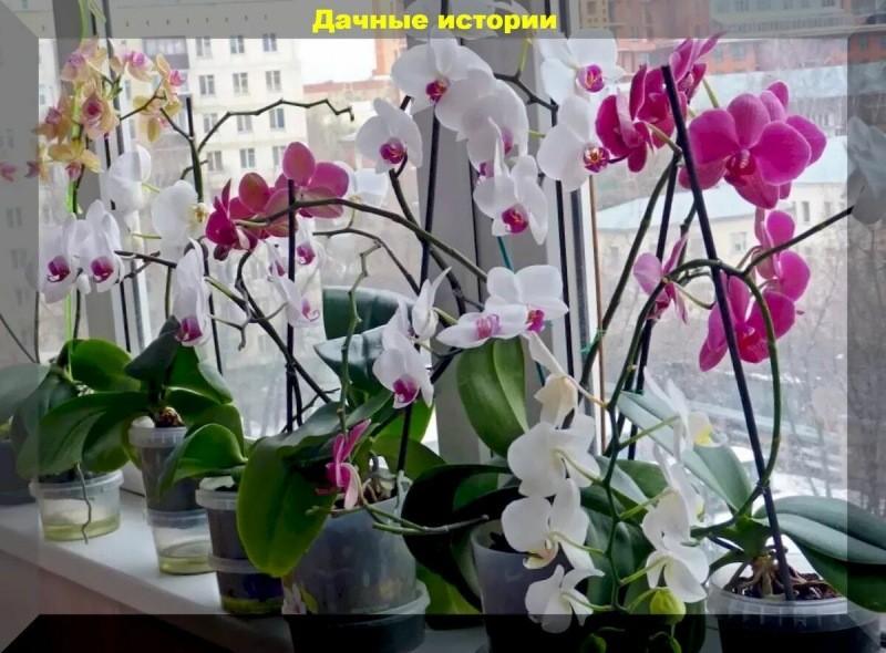 Типичные и фатальные ошибки при выращивании орхидей. Советы начинающим