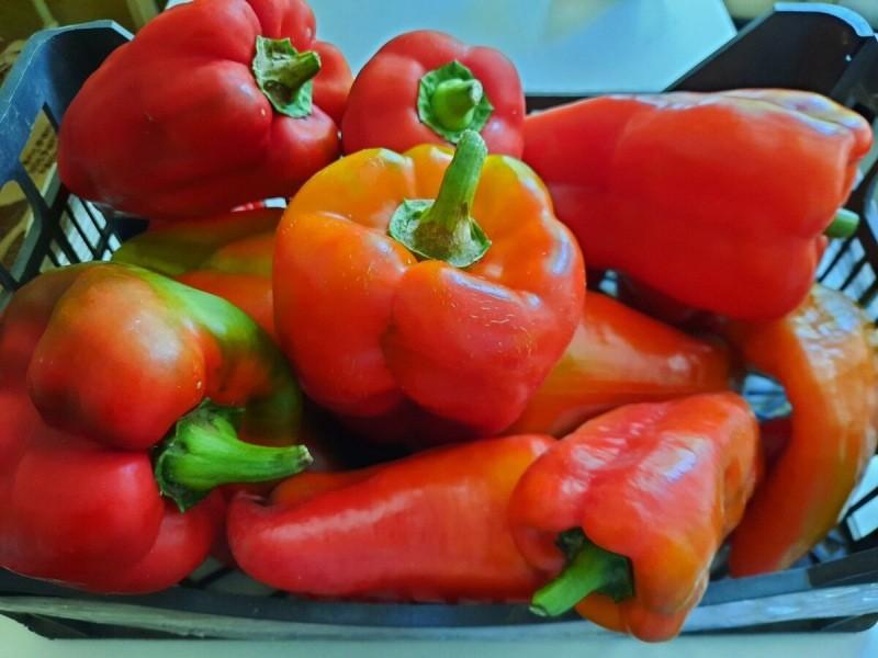 10 важных принципов выращивания сладкого перца. Плоды будут крупными и вкусными