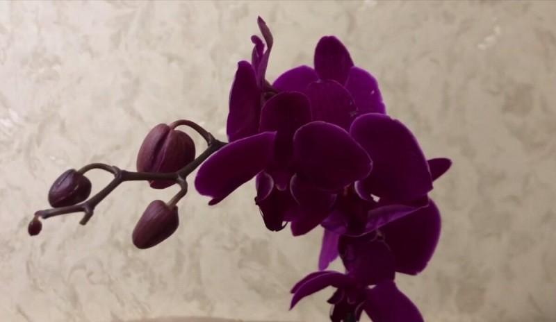 Что будет, если у орхидей после цветения не удалять цветоносы
