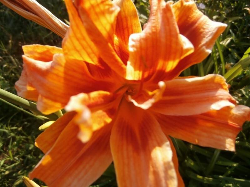 """Цветок """"ленивого"""" садовника"""