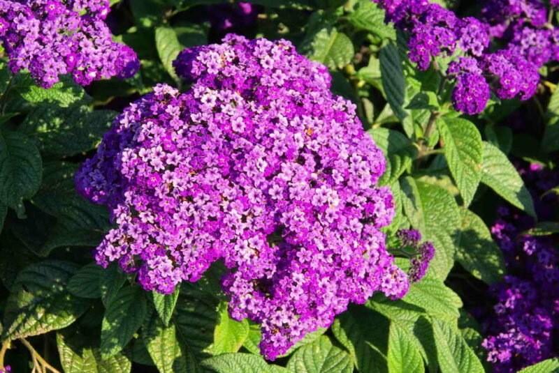 Цветы, которые зацветают в год посева и радуют красками весь летний сезон