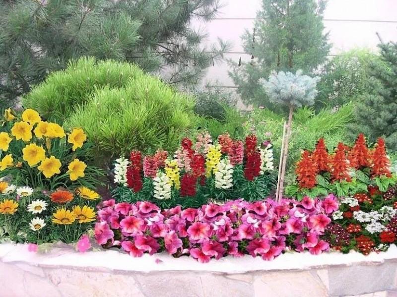 Хотите сделать свой участок по-настоящему очаровательным – посадите рядом с петунией некоторые растения