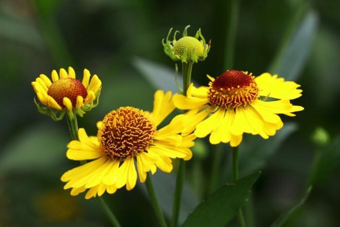 Посадите эти 10 неприхотливых многолетников и сад будет красив весь сезон без особых хлопот
