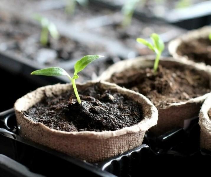 Создаем оптимальные условия для выращивания рассады