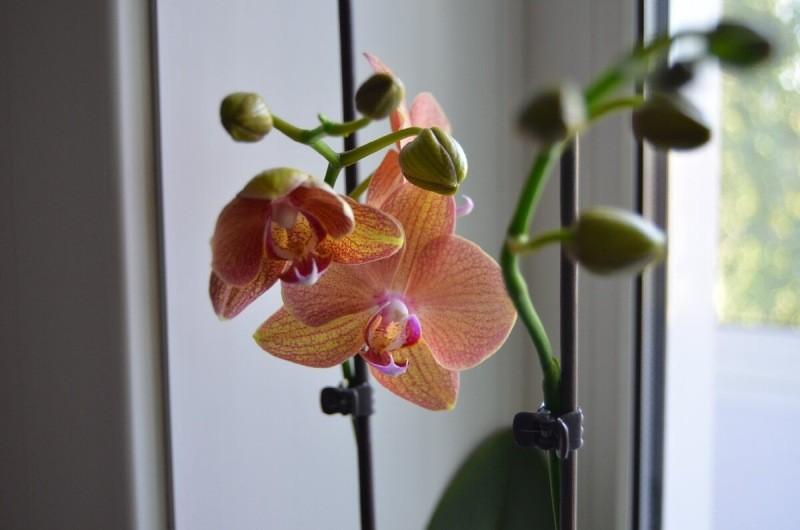 7 нельзя - не делайте так с Орхидеями, советы для новичков и не только