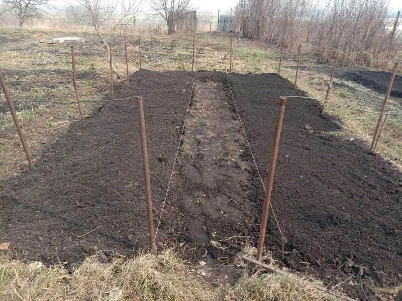 А вместо картошки я лучше газон посажу!