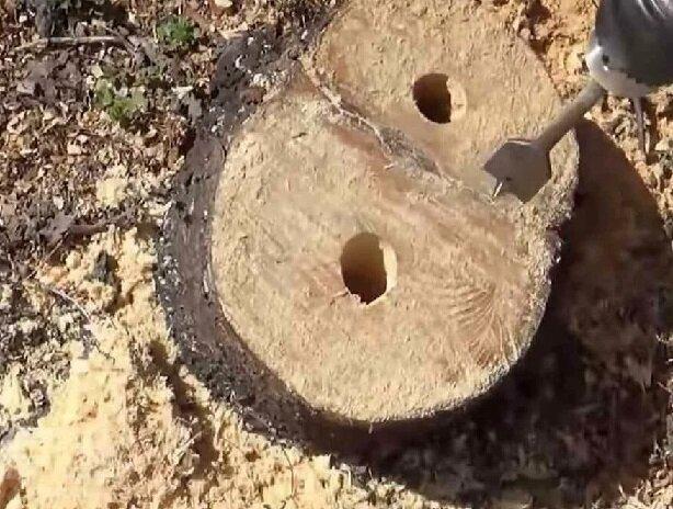 Как удалить пень без выкапывания и применения техники: лайфхак от садоводов