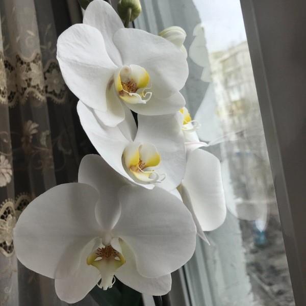 Магия орхидеи Вред или польза Белый фаленопсис