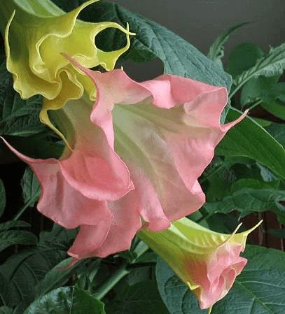 Рассада на 15 апреля: цветы, экзоты, овощи, первое разочарование