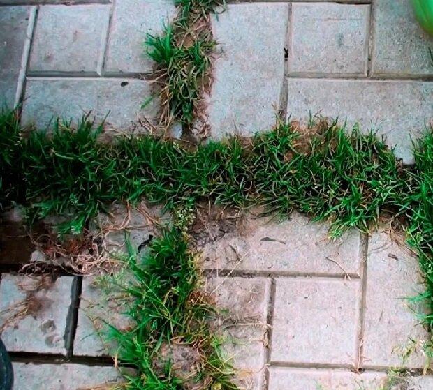 Трава и мох гибнут за сутки! Рассказываю, какое средство использую в качестве гербицида