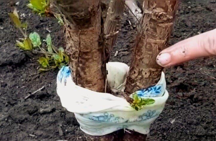 5 простых методов избавления от муравьев в саду и на огороде без химии и навсегда