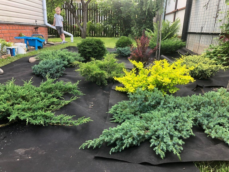 Как бороться с травой между плиток и с сорняками на грядках. Советы агронома со стажем для дачников