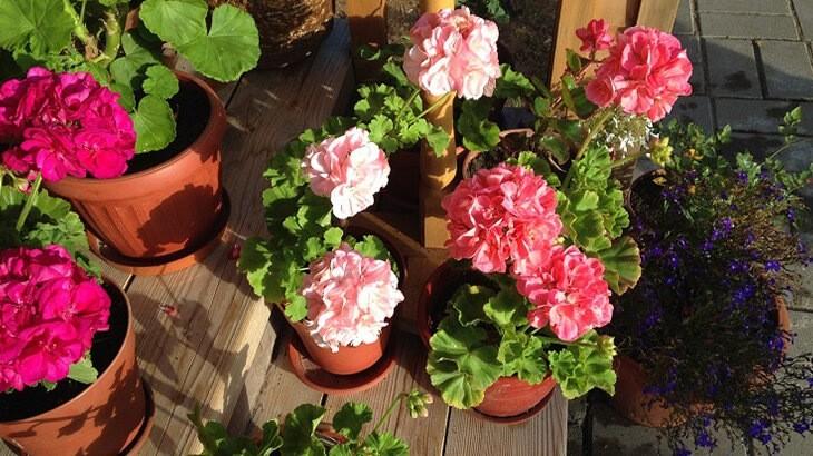 Немного о своих растениях - показываю и рассказываю, что у меня растёт
