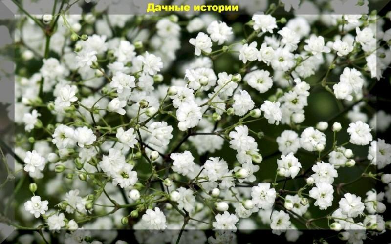Очень красивые, необычные, и неприхотливые однолетние цветы для сада. Сеем сразу в грунт