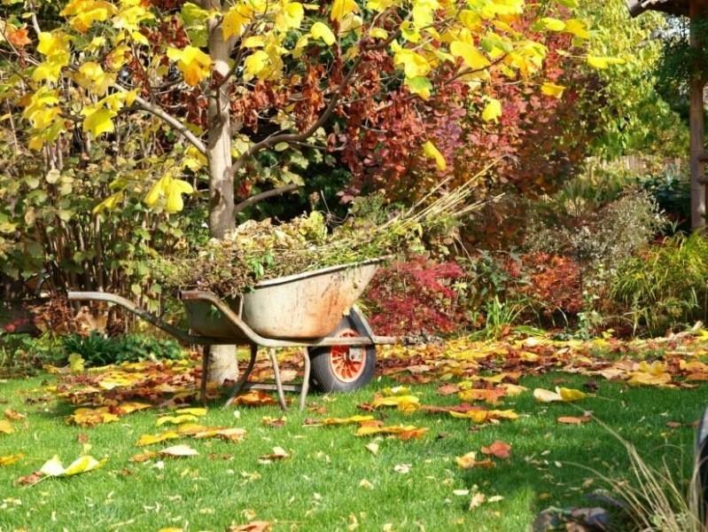 Чего не надо делать в саду в конце лета