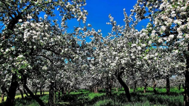 Как правильно сажать плодовые деревья. Пошаговое руководство