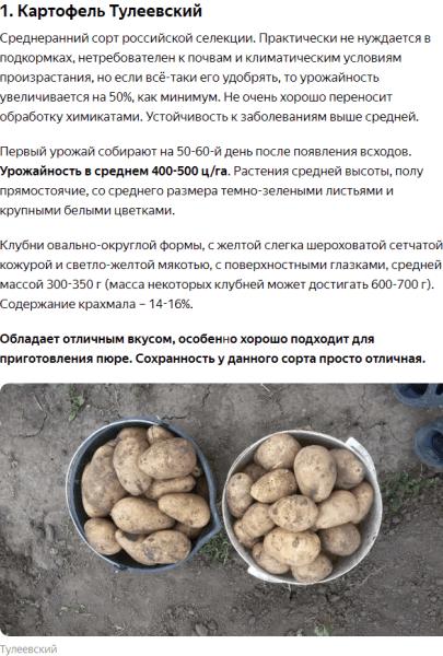 По совету крестного в этом году я посадил 2 новых сорта картофеля. Они оказались самыми продуктивными без удобрений за всю мою летнюю практику