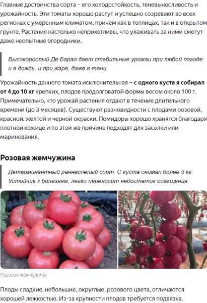 Сажаю только эти 3 лучших сорта томатов, которые растут везде и совсем не болеют. Урожаю завидуют все соседи