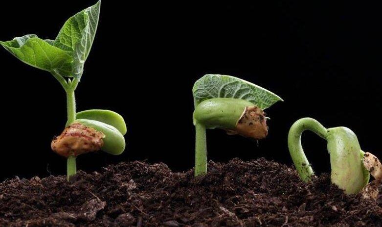 Сроки хранения семян. Экспертное мнение. При покупке учитывайте