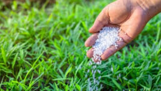 Чем, как и когда подкармливать газон