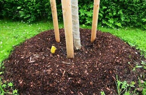 Что сделать осенью, чтобы сад был здоровым, выглядел опрятно и не доставлял больших хлопот весной