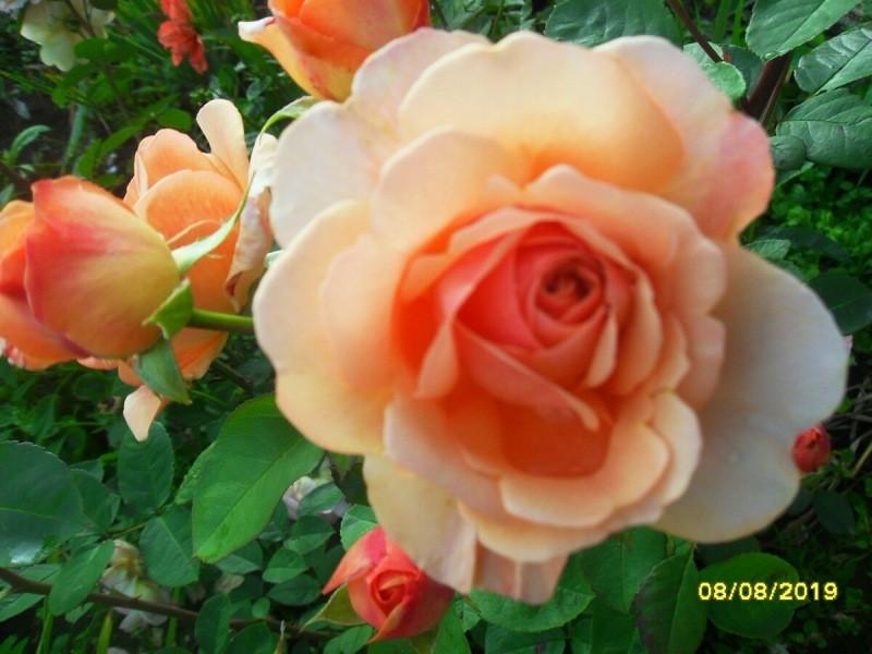 Цветочные разочарования и радости уходящего сезона