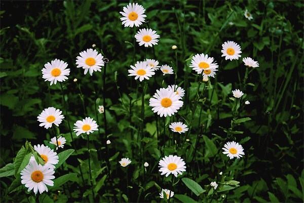 Цветы, которые долго не живут