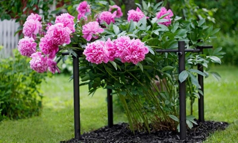 Декоративные опоры для сада и огорода