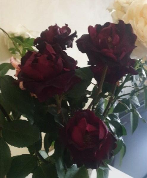 Как продлить цветение роз осенью