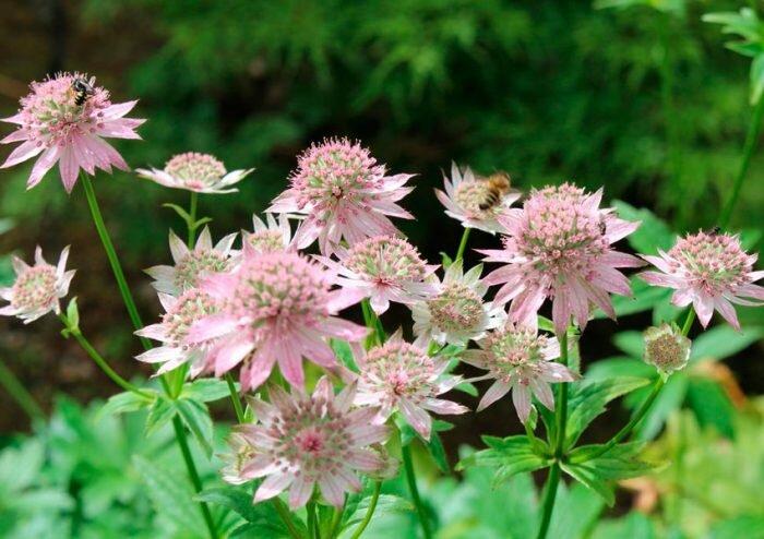 Какие растения хорошо себя чувствуют с папоротником