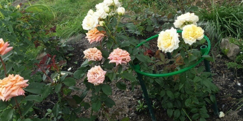Маленькие хитрости для создания красивого сада