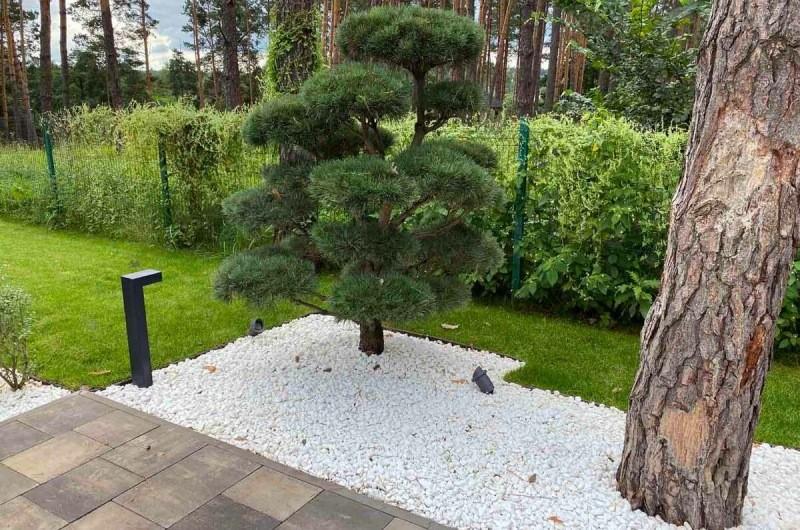 Оформление области возле дерева на садовом участке