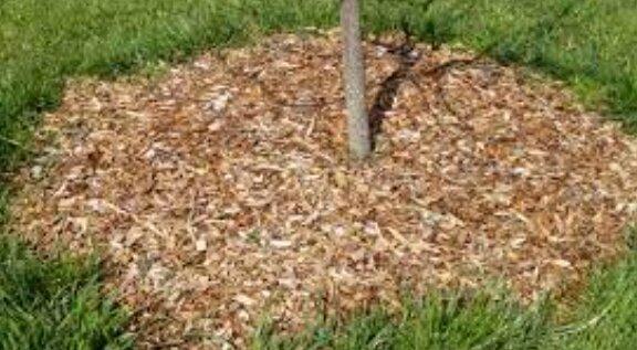 Осенная подготовка сада к наступающей зиме. Что делать надо