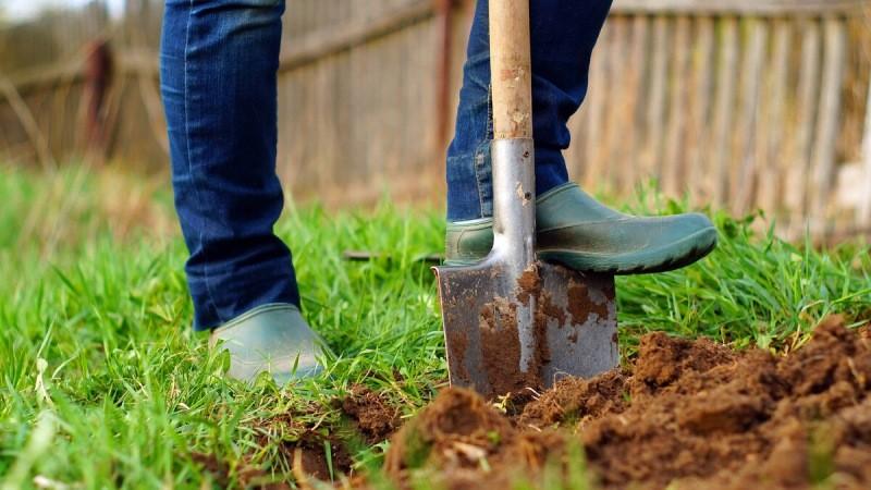 Пять важных правил подготовки огорода на зимовку