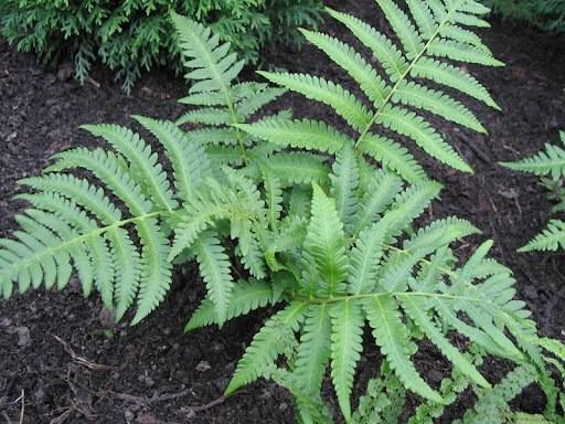 Растения-агрессоры, в которыми мне справится до конца так и не удалось: часть 2